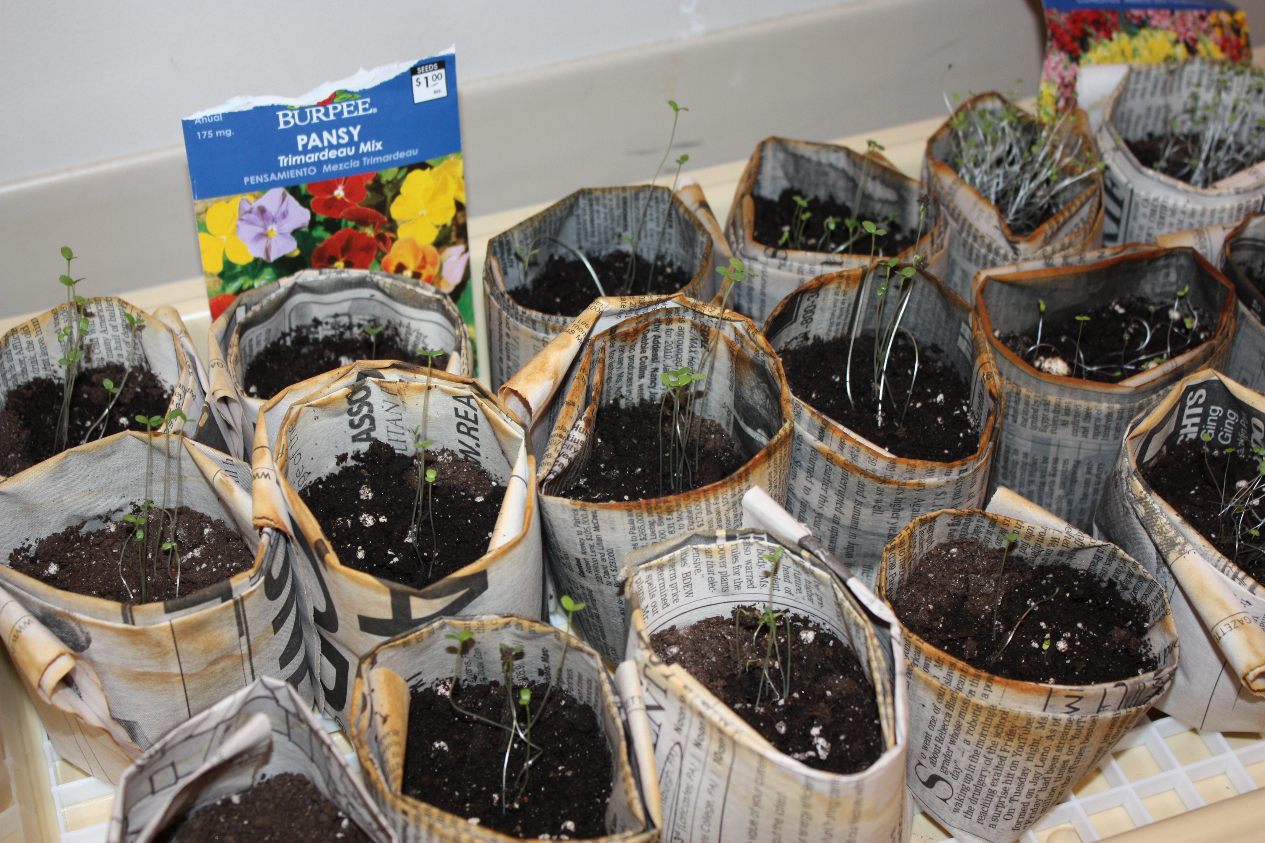 Celebrating earth day go green with recycled newspaper seedling pots csa and more the - Recycled containers for gardening ...