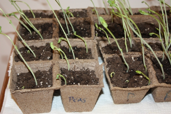 Rodef Shalom Preschool Seedlings