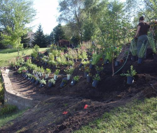 Transforming a Suburban Slope into an Edible Landscape