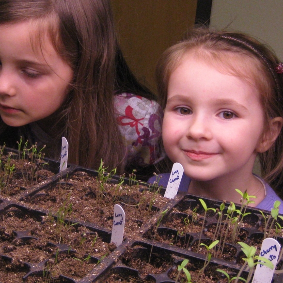 Seedlings planted by kids in Rodef Shalom Preschool