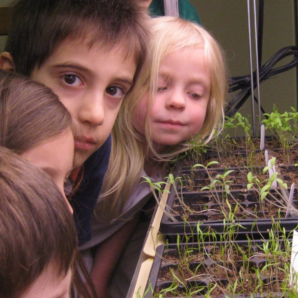 kids looking at seedlings growing in grow light